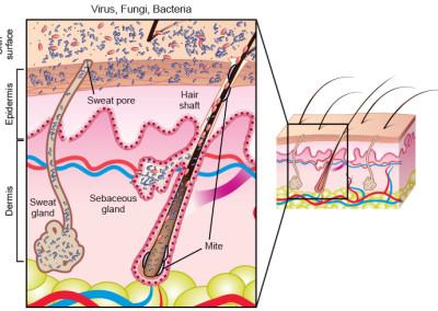 Medical & Scientific Illustrations – Quantum Think